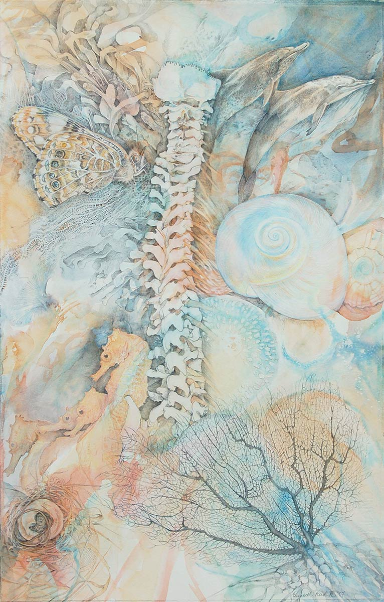 DELPHINUS-spine-drawing-with-dolphins-ocean-shells-by-artist-Elizabeth-Reed