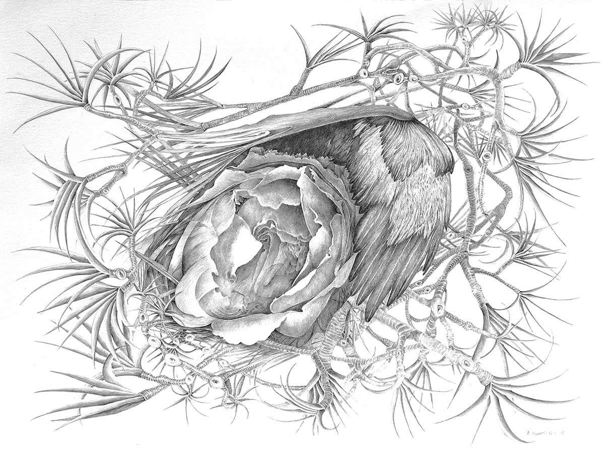 NEST-graphite-drawing-of-nature-by-artist-Elizabeth-Reed