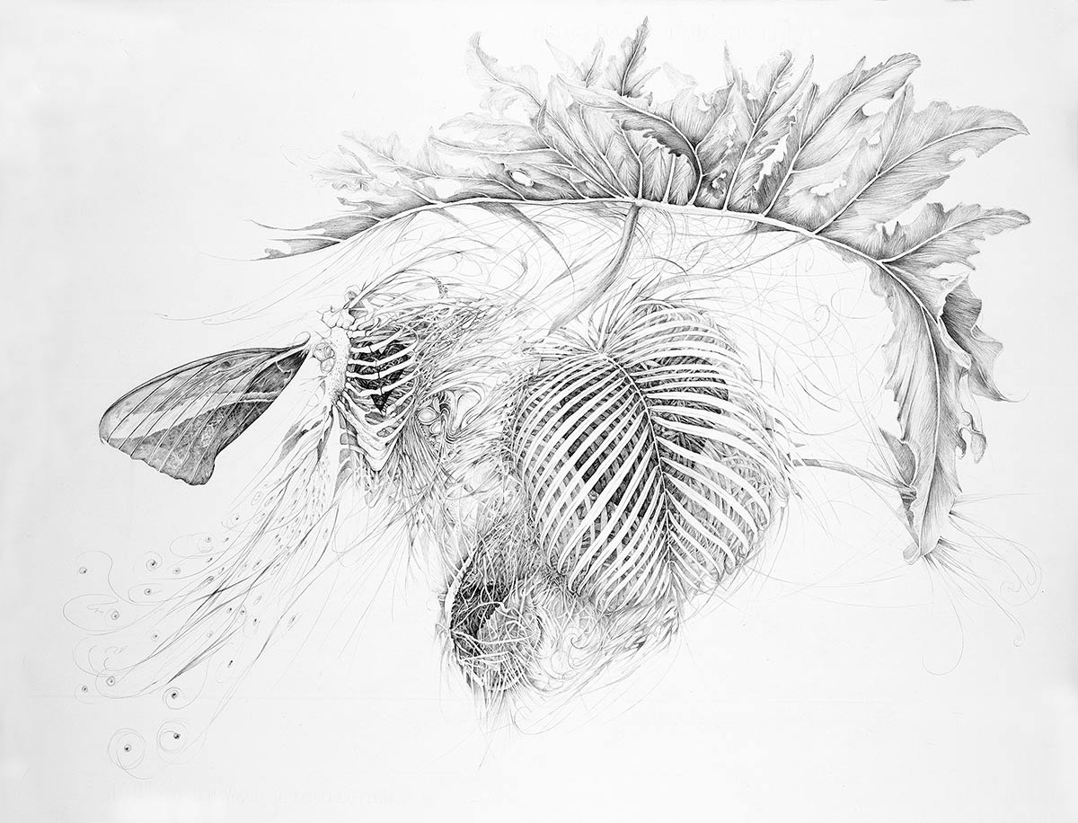 OPEN-HEART-graphite-drawing-by-artist-Elizabeth-Reed-about-open-hearts-and-nature