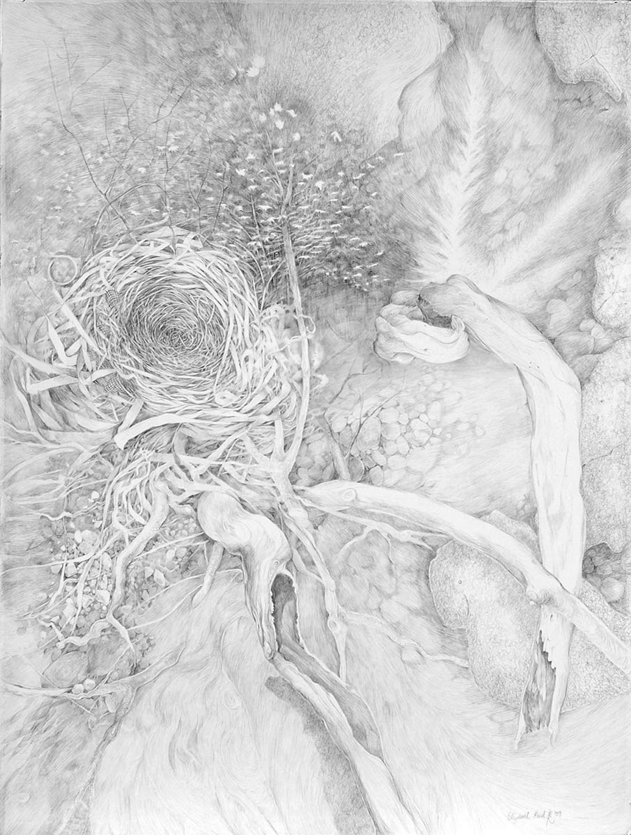 QIAN-silverpoint-drawing-of-nests-and-nature-by-artist-Elizabeth-Reed