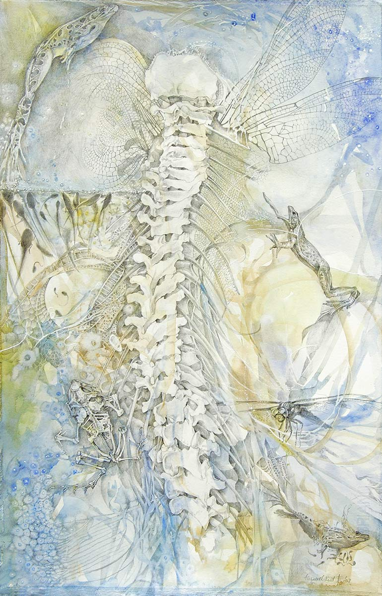 SYMBIOSIS-spine-drawing-by-artist-Elizabeth-Reed-frogs-tadpoles-dragonfly